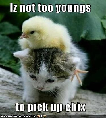 funny-pictures-kitten-is-not-too-young-for-chicks.jpg