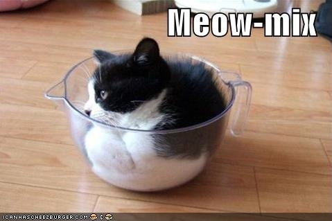 funny-pictures-kitten-mixing-bowl.jpg